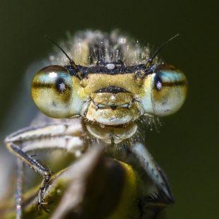 Macros insectes